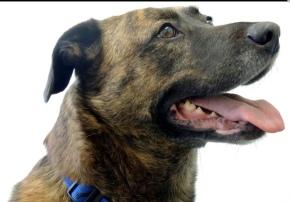 vet veterinarian new-vet ellesmere-port opening-october family-run independent-vet ellesmere-port-vet small-animal-vet veterinary-practice-ellesmere-port
