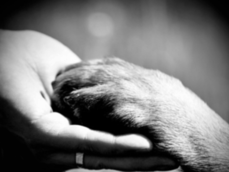 at-home-euthanasia, end-of-life, put-to-sleep, pet-euthanasia, quality-of-life ellesmere-port-vet wirral-vet dogs-ellesmere-port not-for-profit-vet