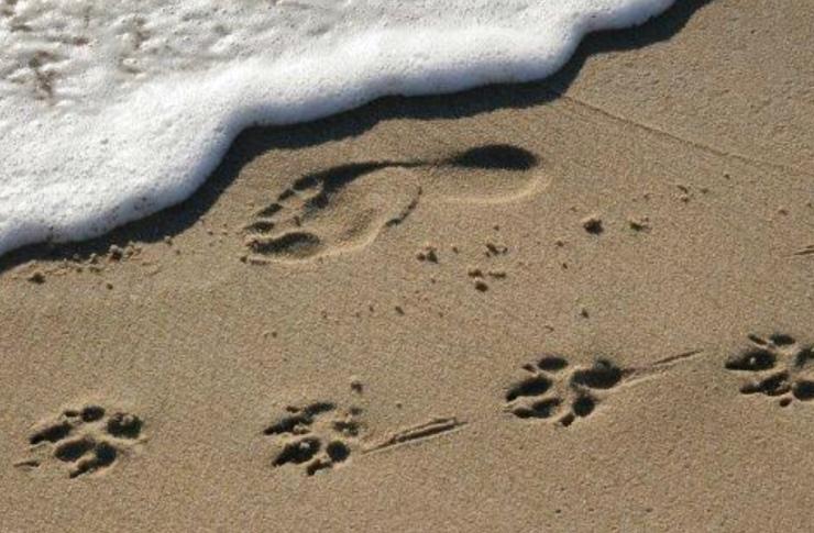 enfield-road time-to-say-goodbye, is-it-time, ellesmere-port-vet wirral-vet dogs-ellesmere-port not-for-profit-vet wirral animals
